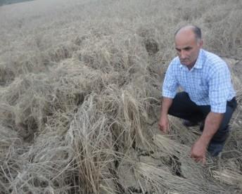 dry field1